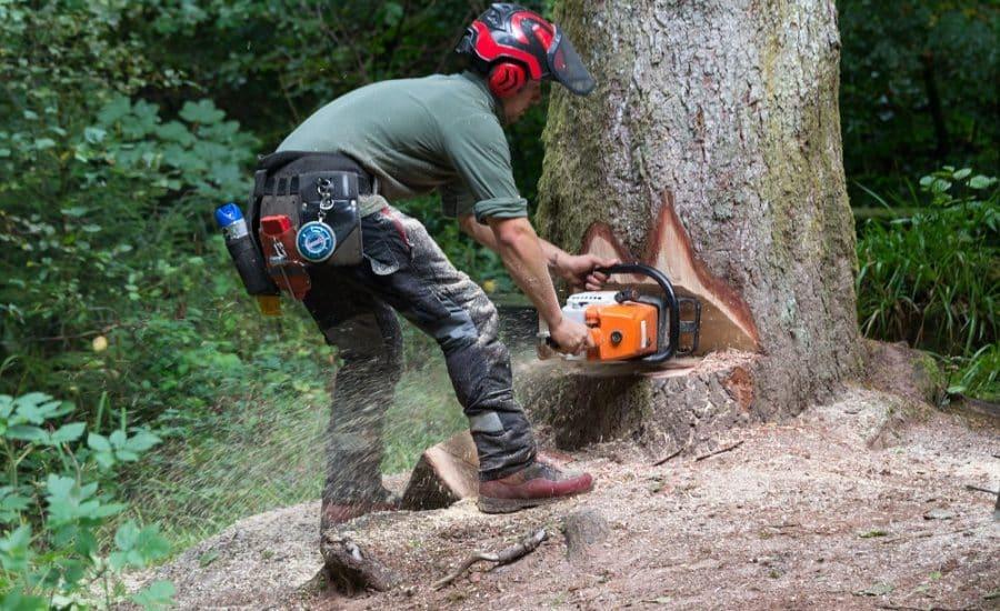 Conseils pour l'élagage des arbres